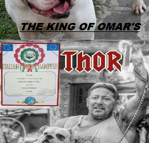"Campione Nazionale American Bulldog: ""Thor The King Omar's""…"